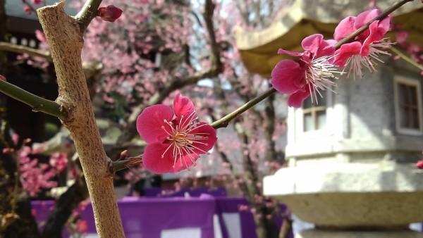 京菓子コレクション in 北野天満宮