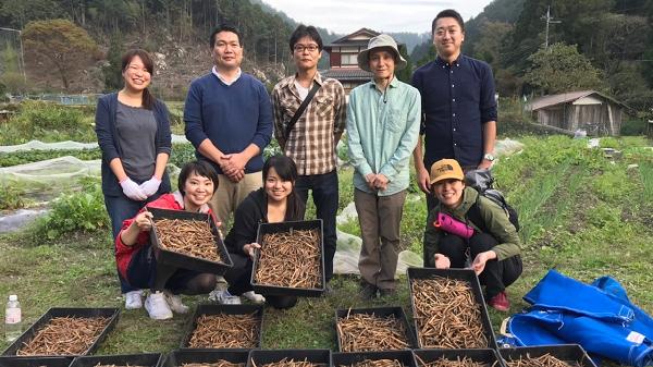 小豆収穫体験